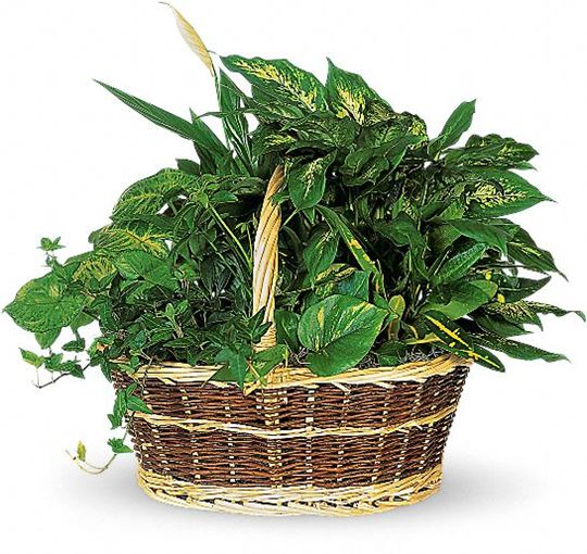 Picture of Large Basket Garden