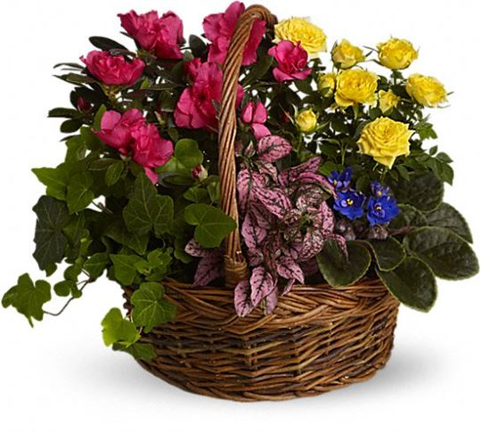 Picture of Blooming Garden Basket