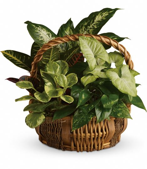 Picture of Emerald Garden Basket
