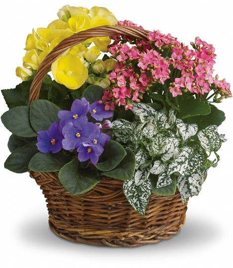 Picture of Spring Has Sprung Mixed Basket
