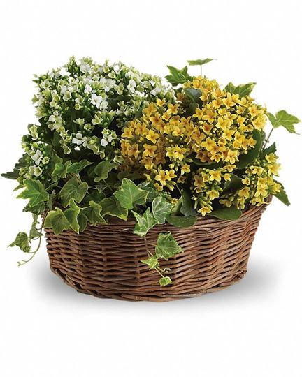 Picture of Basket of Joy