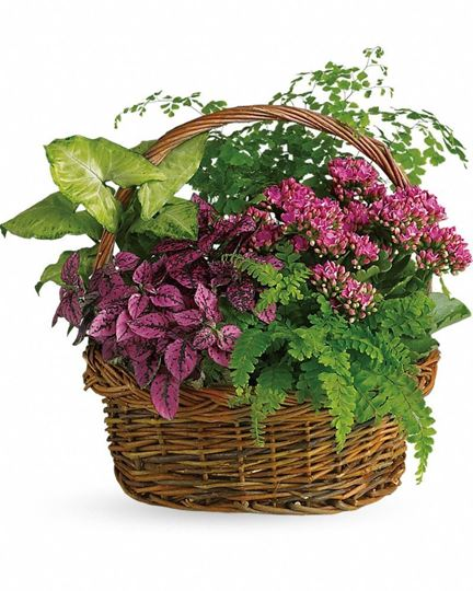 Picture of  Secret Garden Basket