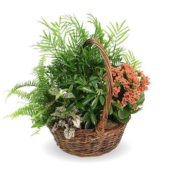 Picture of Ferns And Flowers