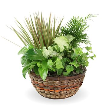 Picture of Basket Of Beauty