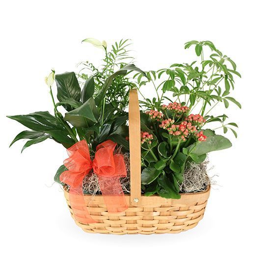 Indoor Garden Basket