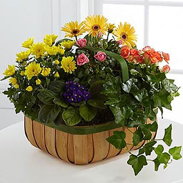 Picture of Gentle Blossoms Basket
