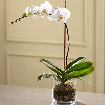 Picture of White Orchid Planter